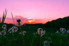 Ein Sonnenuntergang auf dem Bauernhof stockfotografie