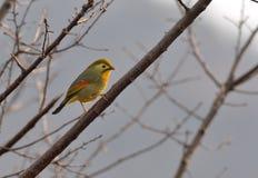 Ein Sonnenvogel Lizenzfreie Stockbilder