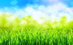 Ein sonniger Frühlingshintergrund des grünen Grases lizenzfreies stockbild