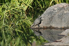 Ein sonniger Tag, zum sich auf dem Felsen zu entspannen Lizenzfreies Stockfoto