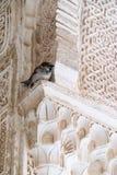 Ein Spatz im Alhambra Stockfotos