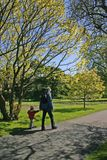 Ein Spaziergang im Park im Frühjahr stockbild