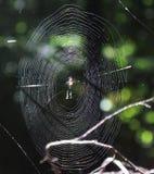 Ein spiderweb auf einem Baum lizenzfreie stockbilder