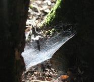 Ein spiderweb auf einem Baum lizenzfreies stockfoto