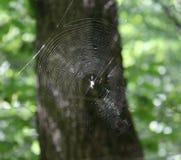 Ein spiderweb auf einem Baum stockbild