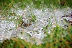 Ein Spinnennetz Lizenzfreies Stockbild