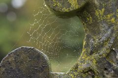 Ein Spinnennetz auf einem Grundstein stockbild
