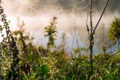 Ein Spinnennetz morgens mit der Sonne strahlt aus lizenzfreies stockbild