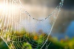 Ein Spinnennetz morgens mit der Sonne strahlt aus Lizenzfreie Stockbilder
