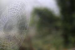 Ein Spinnennetz umfasst im Tau Stockbild
