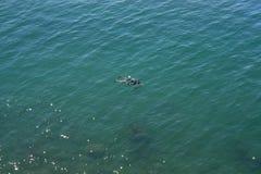 Ein Sporttaucher im blauen Meer lizenzfreie stockbilder