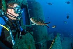 Ein Sporttaucher und ein Fisch auf einem Wrack Lizenzfreie Stockbilder