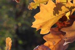 Ein Stück des Herbstes Stockbild