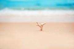 Ein Stück Koralle vor den Wellen auf dem weißen Sandstrand lizenzfreies stockfoto