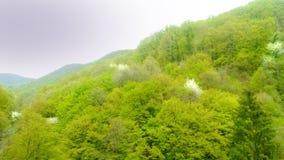 Ein Stück Schönheit im Zagreb-Wald - Sljeme Lizenzfreie Stockfotos