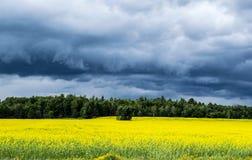 Ein stürmischer Himmel über einem gelben Feld Lizenzfreies Stockbild