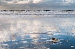 Ein stürmischer Tag in Meer mit dem Himmel reflektierte sich im nassen Sand Stockbild