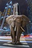 Ein Stadtdschungel Stockfoto