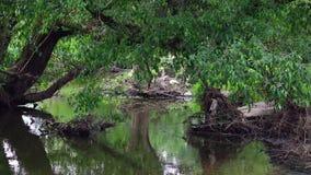 Ein Stadtfluß von Bäumen gesäumt Es gibt den Rückstand und Schmutz, die von der Frühlingsflut zurückgelassen werden stock video