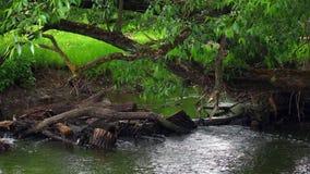 Ein Stadtfluß von Bäumen gesäumt Es gibt den Rückstand und Schmutz, die von der Frühlingsflut zurückgelassen werden stock footage