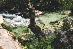 Ein Stamm durch den Fluss Stockfotografie