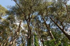 Ein Stand von Bäumen Lizenzfreie Stockfotos