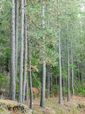 Ein Stand von grünen Bäumen lizenzfreie stockfotos
