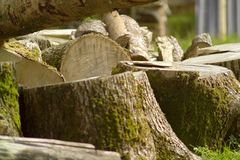 Ein Stapel des Brennholzes Lizenzfreie Stockfotos