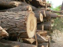 Ein Stapel des Holzes Lizenzfreie Stockfotos