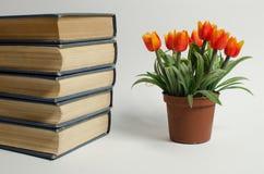 Ein Stapel von Büchern und von Blume auf einem weißen Hintergrund Stockfotografie