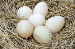Ein Stapel von braunen Eiern in einem Nest Lizenzfreies Stockfoto