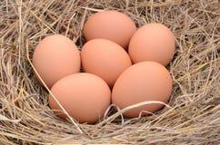 Ein Stapel von braunen Eiern in einem Nest stockfotografie