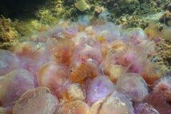 Ein Stapel von den zahlreichen Quallen, die auf dem Meeresgrund sterben lizenzfreie stockfotos