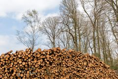 Ein Stapel von gefällten Bäumen in einem Wald Lizenzfreies Stockfoto