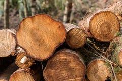 Ein Stapel von gefällten Baumstämmen Stockbild