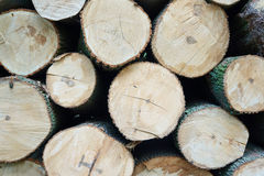 Ein Stapel von geschnittenen Baumstämmen Lizenzfreie Stockbilder
