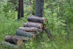 Ein Stapel von meldet den Wald an Lizenzfreies Stockbild