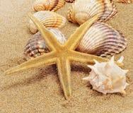 Ein Stapel von Seashells lizenzfreie stockfotografie