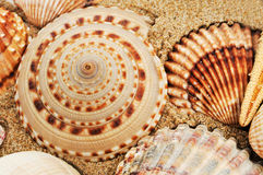 Ein Stapel von Seashells Stockfotos
