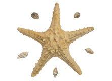 Ein Starfish und einige Oberteile lokalisiert lizenzfreies stockbild