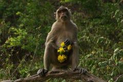 Ein stehender Affe, der gelbe Blumen hält Stockfoto