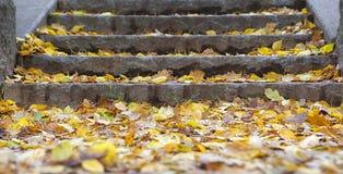 Ein Steintreppenhaus abgedeckte Blätter Lizenzfreie Stockfotografie