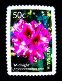 Ein Stempel, der in Australien gedruckt wird, zeigt ein Bild Mitternachtsrhododendronrosablume 1978 auf Wert bei Cent 50 Stockbilder