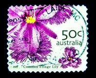 Ein Stempel, der in Australien gedruckt wird, zeigt ein Bild der purpurroten Blume der gemeinen Fransenlilie auf Wert bei Cent 50 Stockfotografie