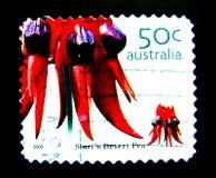 Ein Stempel, der in Australien gedruckt wird, zeigt ein Bild der roten Blume Sturt-` s Wüste Erbse auf Wert bei Cent 50 Stockbilder