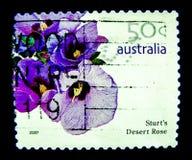 Ein Stempel, der in Australien gedruckt wird, zeigt ein Bild sturt ` s der purpurroten Blume Wüstenrose auf Wert bei Cent 50 Stockbild