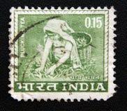 Ein Stempel, der im Indien gedruckt wird, zeigt die Frau, die Tee, circa 1965 zupft Lizenzfreie Stockfotos
