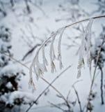 Ein Stiel des Grases, glasiert mit Eis durch einen Frühlingsschneesturm stockbild