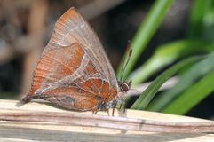 Ein stillstehender Schmetterling stockfotos