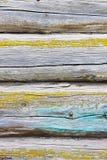Ein stilvoller Weinlesehintergrund: eine Holzhauswand hergestellt von einem Strahl des gelben Mooses umfasst mit blauer Farbe Stockfotografie
